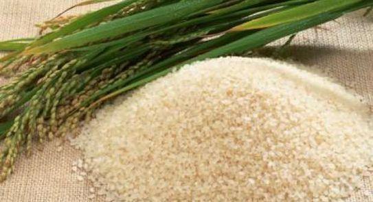 شعبة الأرز: انخفاض في الأسعار وتوافر المحصول بكميات كبيرة فى الاسواق