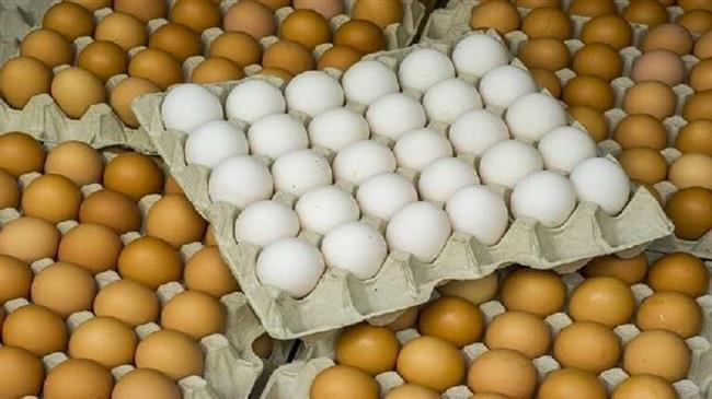 الزراعة: طرح بيض المائدة بـ 45 جنيها للكرتونة