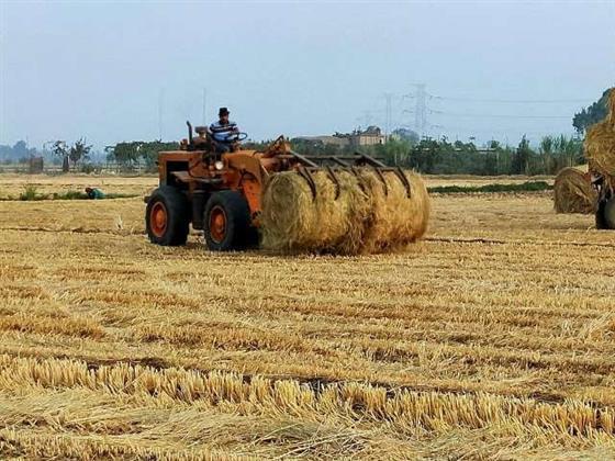 محافظ الشرقية يُشدد على التصدي لظاهرة حرق قش الأرز