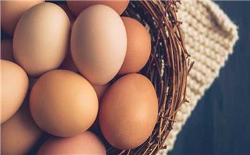 التموين توضح أسباب ارتفاع أسعار البيض