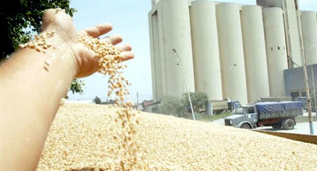 الجزائر.. الكشف عن مصير شحنة القمح الفرنسية الفاسدة