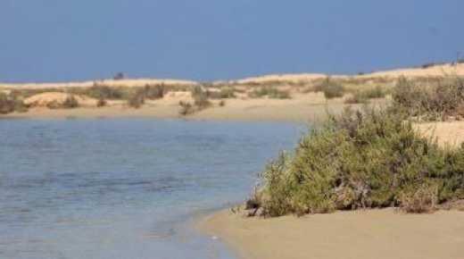 """"""" الزرانيق """" محمية مصرية لــ هجرة الطيور وشاهد على تاريخ الرومان"""