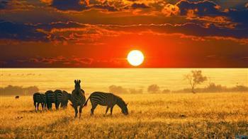 «علبة» ما بين الحياة البرية والقبائل المحلية