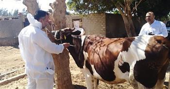تحصين أكثر من 25 ألف رأس ماشية ضد الحمى القلاعية والوادي المتصدع ببني سويف